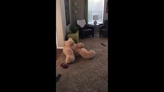 Girltrips and stumbles as she tries to stand in teddy bear costume - Video