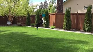 """""""Ultimate Frisbee Dogs   Funny Wins and Fails Compilation"""""""