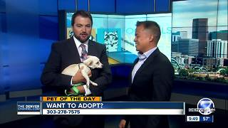 Pet of the day for August 6th - Video