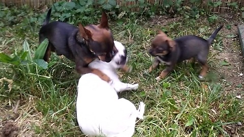 family dog playing with puppies