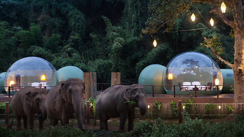 Jungle Bubble: Sleep A Few Feet Away From Elephants
