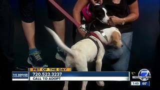 Pet of the day for August 12th - Video