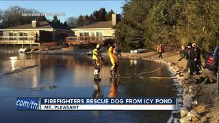 Dog rescued by Racine firefighters after falling through thin ice - Video