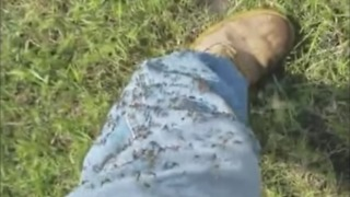 Mosquitoes Swarm Refugio, Texas, After Harvey - Video