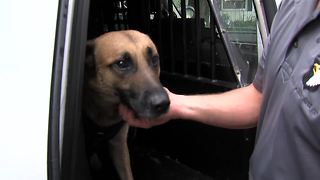 Indiana State Police K-9 found safe after shooting, chase; 'He saved my life.' - Video