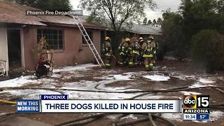 Three dogs killed in Phoenix house fire
