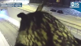 WHAT A HOOT! Traffic cam captures owl watching cars - ABC15 Digital - Video