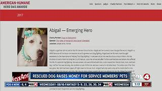 Recovered fighting dog up for national hero dog award - Video