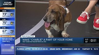 Rescues in Action Jan 25 | Charlie needs a home