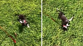 Watch: Adorable video shows heart-warming moment abused dog sees grass for first time
