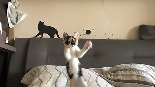 Slow Motion playing kitten. So cute