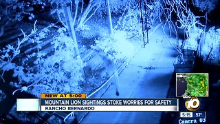 North County mountain lion sightings stoke worries for safety