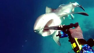 Shark attacks on divers 😨😰