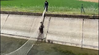Police officers in Spain make clever use of net to pull fawn from canal