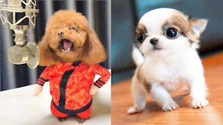Cute Puppies Cute Funny and Smart Dogs Compilation 5 Cute Buddy_1080p
