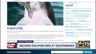 Second dolphin dies at Dolphinaris - Video