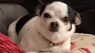 Dog can't howl properly