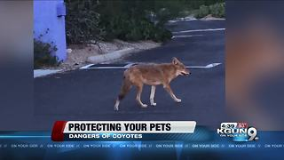 How to protect your pets from coyotes