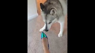 Dog scared of high heels || Viral Video UK