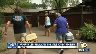 Program uses feral cats to battle rodent problem - Video