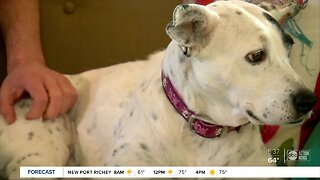 Local shelters strengthen screening policies to prevent pet flipping