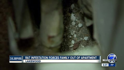 Rat infestation forces family out of apartment