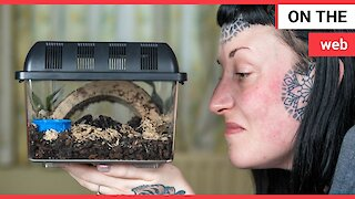 Woman with arachnophobia cured by watching tarantula videos on YouTube