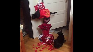 Cat Jumps Over Roses To Celebrate Valentine's Day