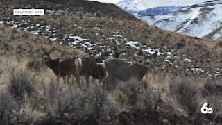 """This winters fawn and calf survival above average, """"things could definitely change"""""""