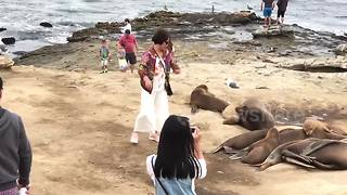 Sea lion scares woman in California - Video