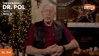 Dr. Pol's Holiday Tip