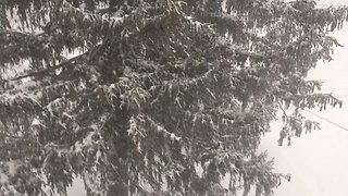 Thundersnow Rumbles During Buffalo Lake-Effect Snow - Video