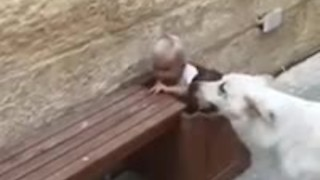 Dog helps kids pick up rocks from plant pot