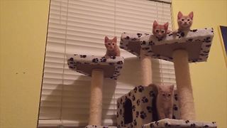Four Adorable Kittens Do A Dance Routine