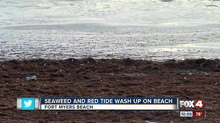 Seaweed, dead fish wash ashore south of Ft. Myers Beach - Video