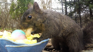 Friendly squirrel gets Easter basket from Grandma - Video