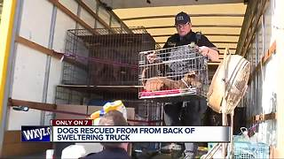 17 dogs taken to Downriver shelters after being found in the back of a truck