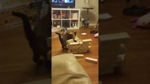 Silly Cat Goes Into Attack Mode On A Wooden Block Tower