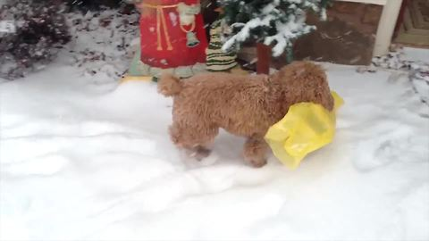 Adorable Puppy Finds The Paper In The Snow