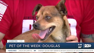 Pet of the Week: Douglas