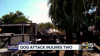 Multiple dogs attack 2 people in Phoenix - Video