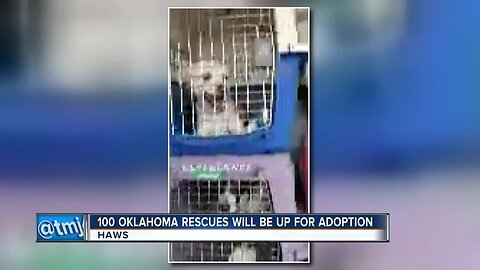 Waukesha Humane Society welcomes nearly 100 animals affected by Oklahoma flooding