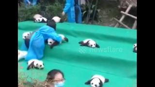 Panda cubs make public debut in China - Video