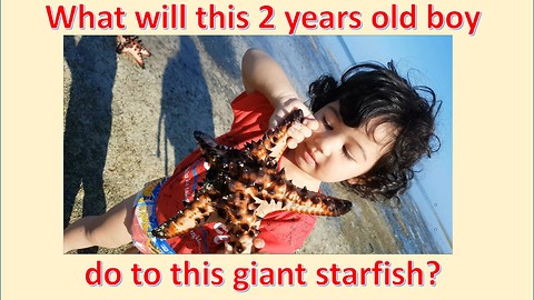 2-year-old Boy Cries to Hold a Giant Starfish: See What He will Do to This Amazing Sea Creature