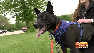 Blend Extra: Giving Back to a Dog Rescue Saving Lives