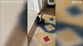 Cat rides a Roomba around the house