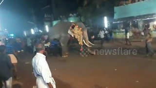Terrifying moment elephant runs amok India temple festival - Video