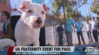 University of Arizona Phi Delta Theta hosts fundraiser for Pima Animal Care Center - Video