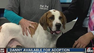 Pet of the week: Danny is big Hound dog with a heart of gold - Video