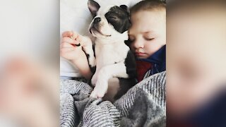 2-Year-Old Boy's New Puppy Suffers The Same Birth Defect
